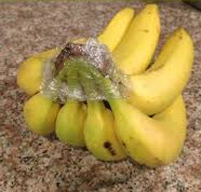 Bunch of Bananas Stem Wrapped