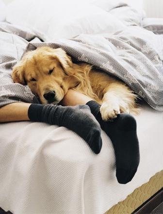 dog sleeping at foot of bed