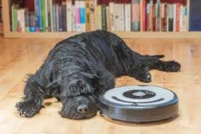 pet removal with robot vacuum
