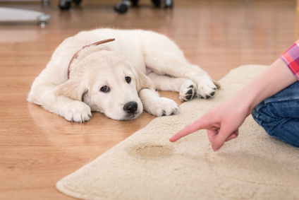 dog pee on rug