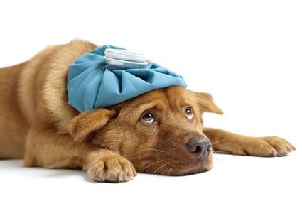 Sick Dog?