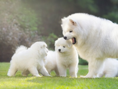 Dog Family Playing