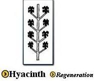 Hyacinth Symbol
