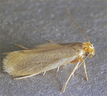 Moths In Area Rugs And Carpets