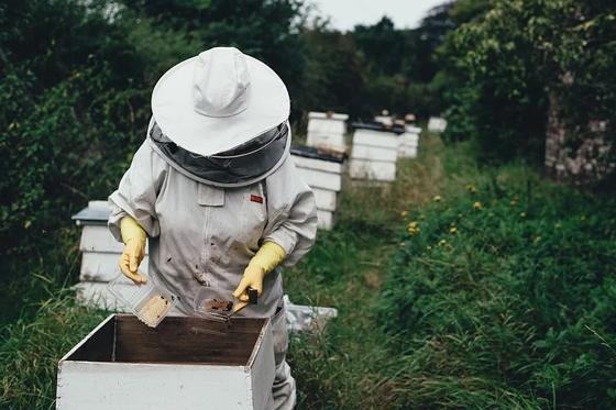Apiary (Bee Farm)