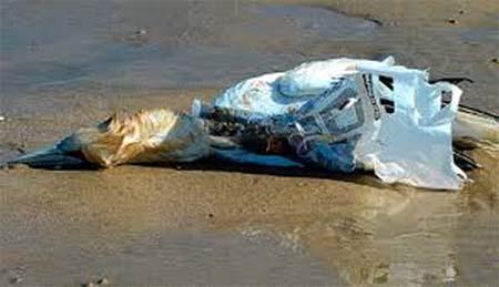 bird killed by plastic