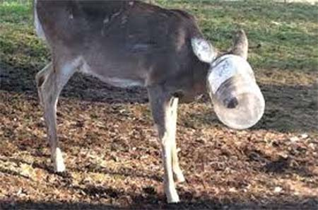 bottle on head of animal