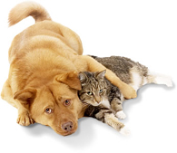 Pets in the Home