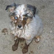 muddy dog on carpet