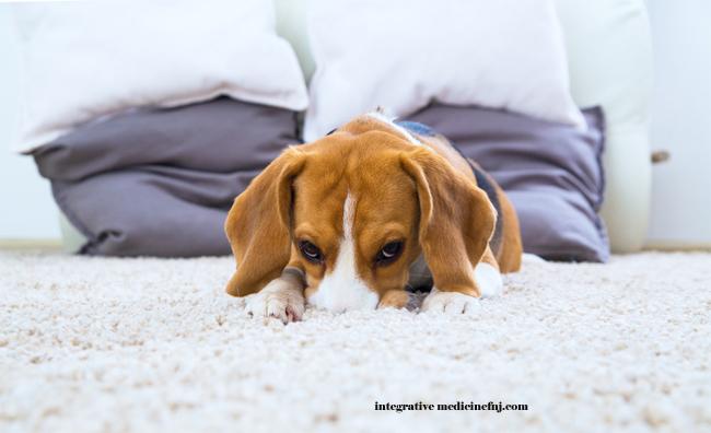 Dog Dander on Carpet