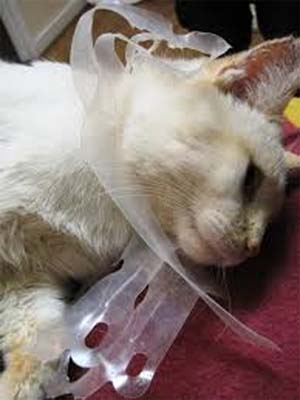 kitten enclosed by plastic