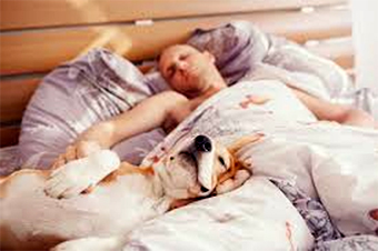 Man in bed with dog