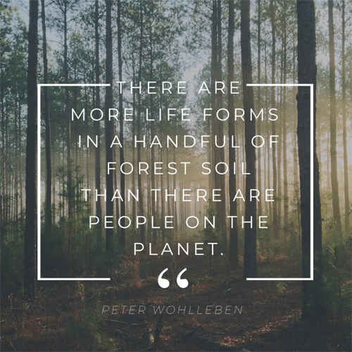 More Life  Forms in Forest Quote