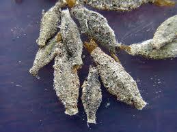 Moth Sacs