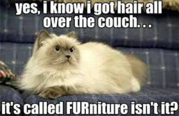 Cat on FURniture joke