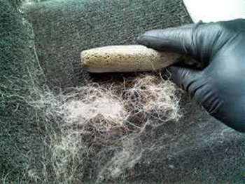 remove pet hair with pumice
