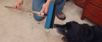 hair removal from carpet