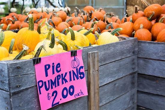 Pie Pumpkins for Sale