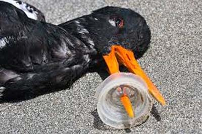 bird killed by plastic
