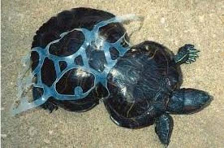 turtle in trouble with plastic