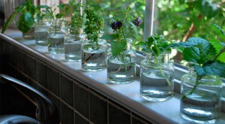 Windowsill Herb Water Garden