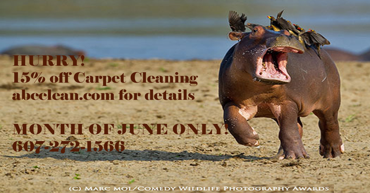 15% off Carpet Cleaning