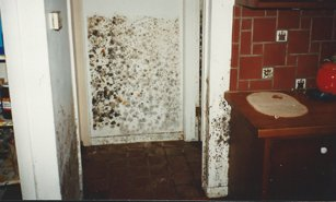 Mold from Water Damage