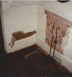 Mold and Mildew