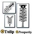 Tulip Symbol