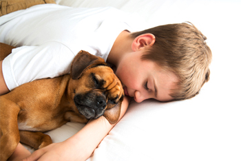 boy in bed with dog
