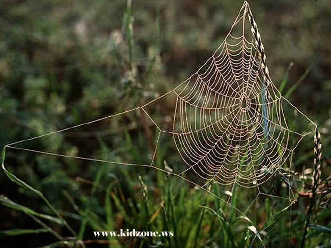 Intricate Spider Web