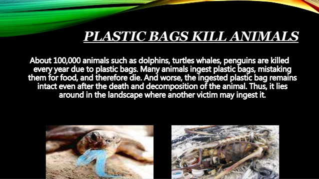 Plastics Kill Animals