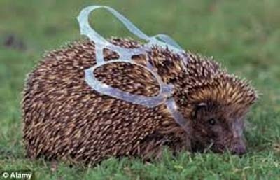 hedgehog in plastic